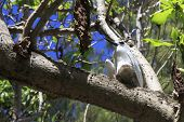 picture of tern  - White tern sits on his chick on a tree branch - JPG