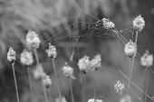 picture of cobweb  - Detail of mystical cobweb tight between stems - JPG