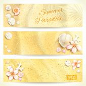 foto of sand dollar  - Set of Horizontal Banners with Sand and Seashells - JPG