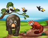 picture of rainforest animal  - Many animals together by the lake - JPG