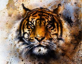 stock photo of tiger eye  - tiger collage on color abstract background rust structure wildlife animals eye contact - JPG