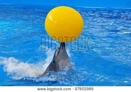 Bottlenose Dolphin In Blue Water With Yellow Ball
