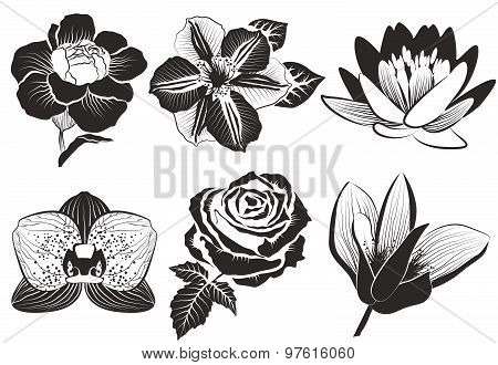 flowers in sketch style: rose, clematis, orchid, water-lily, lotus, carnation and magnolia