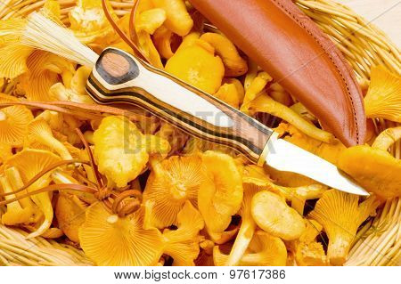 Mushroom Knife On Chanterelles