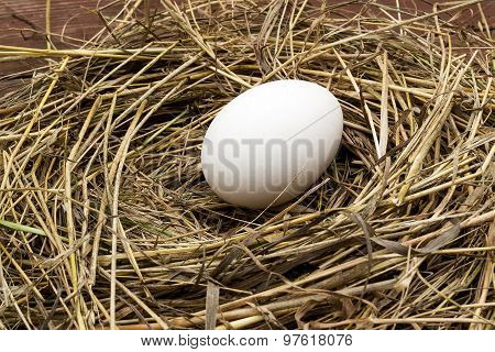 Fresh Organic Goose Egg In A Nest Of Hay