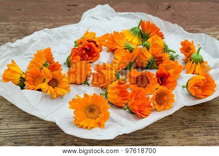 Calendula Flowers Harvested For Drying