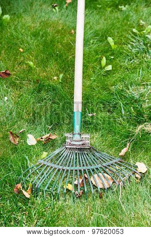 Cleaning Of Fallen Leaves From Lawn By Rake