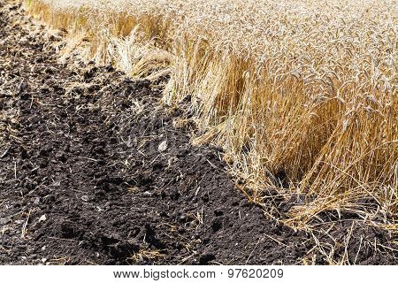 Plowed Field And Plantation With Wheat