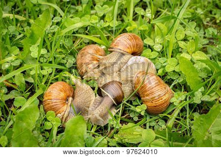 Group Of Snails Sneaking Through A Forest Grass Meadow