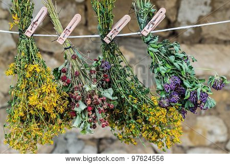 Medicinal Herbs Are Dried In Bunches On A Rope