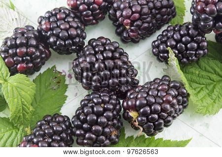 Fresh Blackberries On Blackberry Leaf