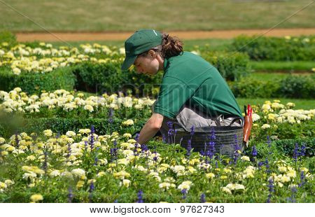 Female gardener tending Flowers