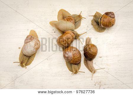 Six Gastropod Snails