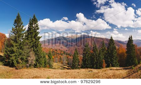 Sunny day in the mountains. Autumn landscape with a beautiful forest. Carpathians, Ukraine, Europe