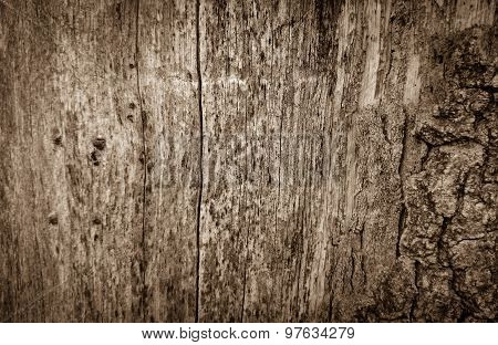 Old Wooden Board With Holes