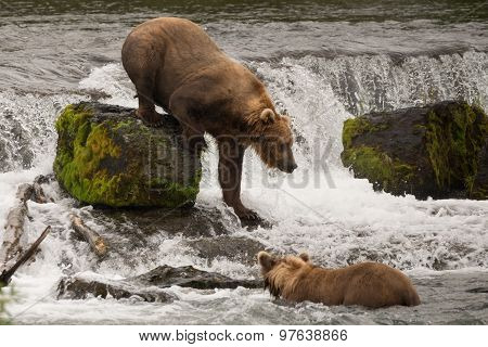 Brown Bear Climbing Down Rock In Waterfall