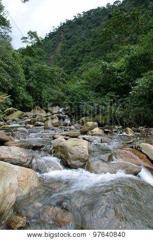 Atlantic Forest In Brazil