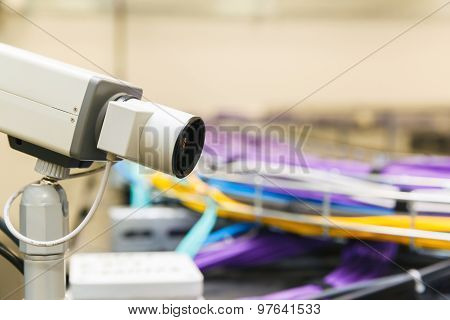 Large group of lilac utp cables
