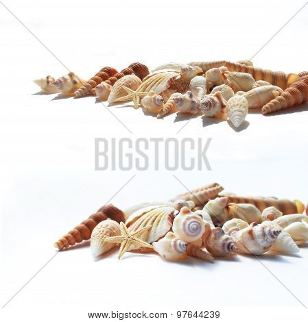 A Lot Of Cockshells With A Starfish