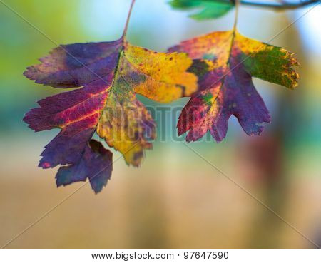 close-up photo of colorful autumn leaves