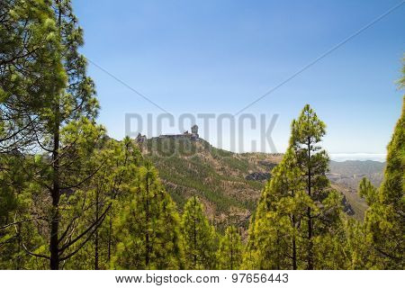 Roque Nublo And Canaria Pine Trees