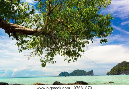 Island Lagoon Branches Overhanging
