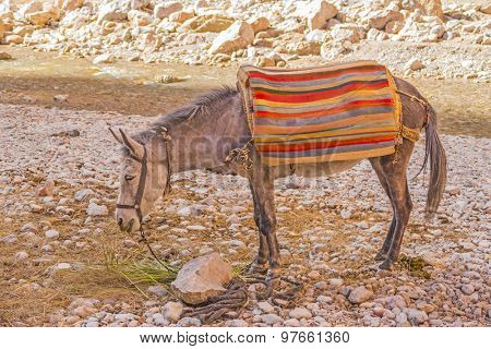 Lonely donkey on shore of Todgha river in Todgha Gorge, Morocco