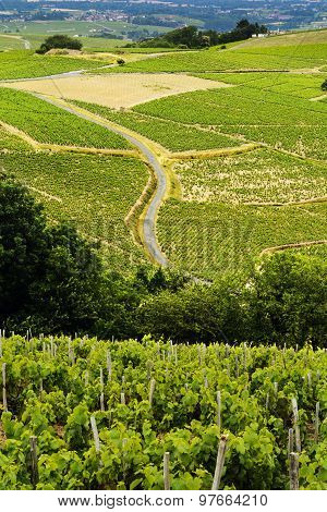 Vineyards Of Beaujolais, France
