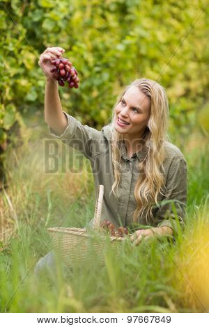Sitting blonde winegrower handing a red grape