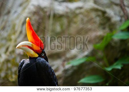 Hornbill Bird On Green Natural Background
