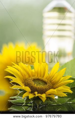 Sunflower And Sunflower Oil Bottle