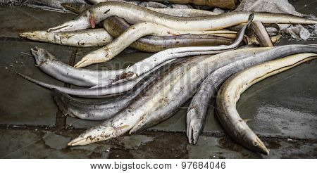 Eel On Sale