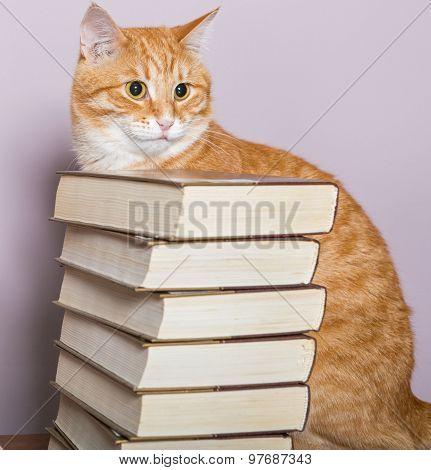 Orange Striped Cat And Books
