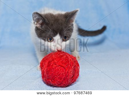 Little Kitten Playing With Ball