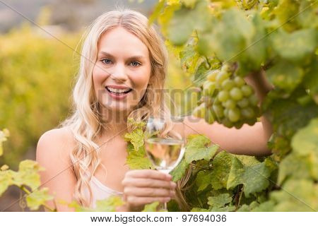 Young happy woman holding a glass of wine and looking at grapes in the grape fields