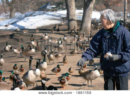Idoso alimentação Parque animais