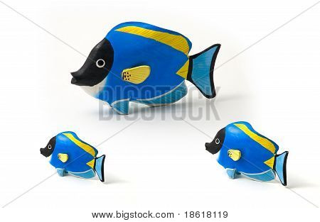 Surgeon Fish Family.