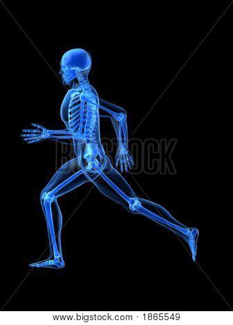 Execução de Anatomia de homem