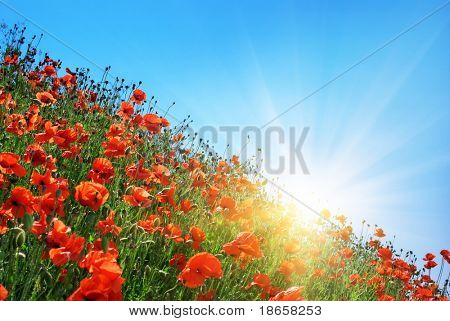 Poppies hill and clear sky. Composition of spring nature.