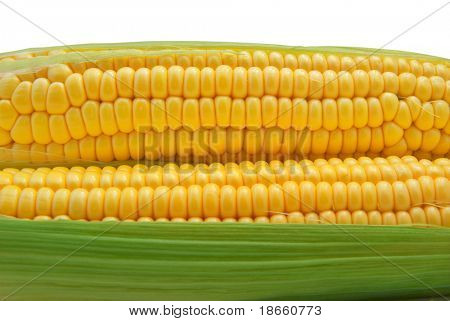 Isolated corn. Element of design.