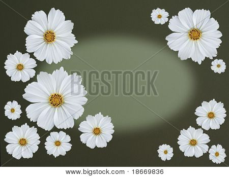 Greetingcard with cosmea flowers