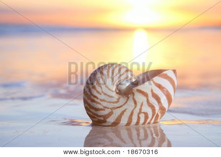 nautilus shell in the sea , sunrise. shallow dof