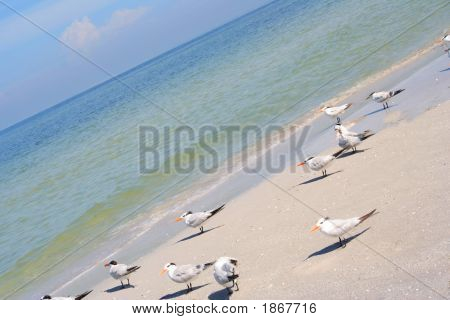 Birds In The Beach