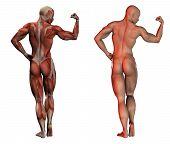 Постер, плакат: Анатомия Фитнес