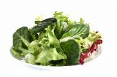 stock photo of escarole  - fresh green leafy salad with tatsoi on plate - JPG