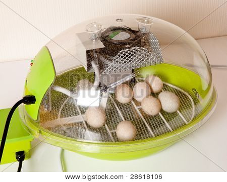 Small modern incubator for various egg sizes with turning motor and ventilation