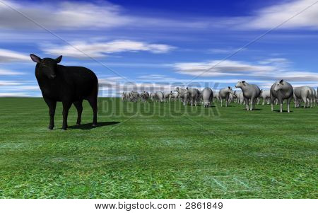 Black Sheep Stands Alone
