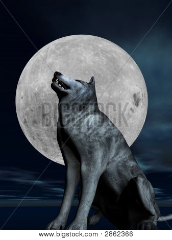 Wolf Howls At The Full Moon
