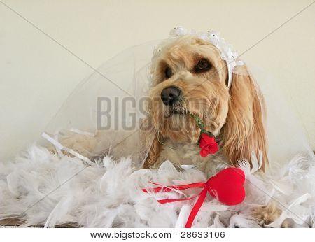 Dogs Wedding