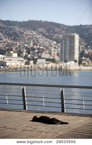 dog sleeping to valparaiso